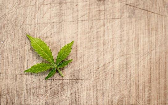 marijuana-3065621__340