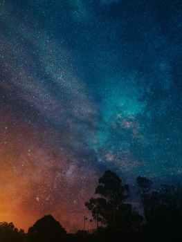 trees under blue and orange night sky