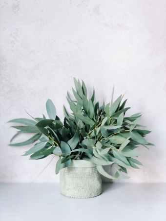 photo of plants on white pot